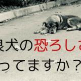 タイ野良犬