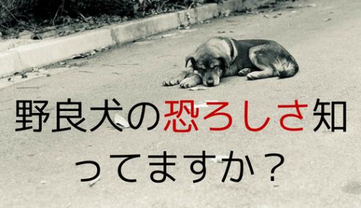 タイの野良犬にガチで追いかけられた僕たちが紹介する4つの対策