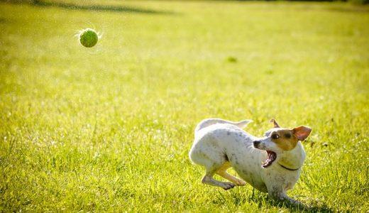 【愛犬】トイプードル用のサークルおすすめ10選【選び方も解説】
